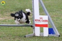 019-agility-dog-cecina-11-04-10