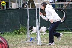 028-agility-dog-cecina-11-04-10