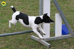 030-agility-dog-cecina-11-04-10