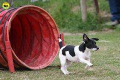 032-agility-dog-cecina-11-04-10