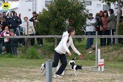 033-agility-dog-cecina-11-04-10