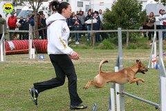 043-agility-dog-cecina-11-04-10