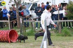 054-agility-dog-cecina-11-04-10