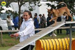 087-agility-dog-cecina-11-04-10