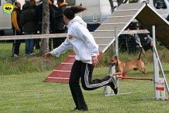 090-agility-dog-cecina-11-04-10