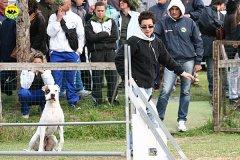 091-agility-dog-cecina-11-04-10