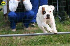 092-agility-dog-cecina-11-04-10