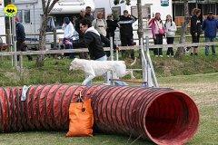 100-agility-dog-cecina-11-04-10