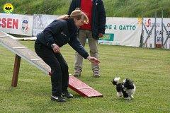 123-agility-dog-cecina-11-04-10