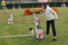 129-agility-dog-cecina-11-04-10