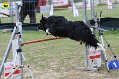 204-agility-dog-cecina-11-04-10