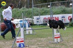 205-agility-dog-cecina-11-04-10