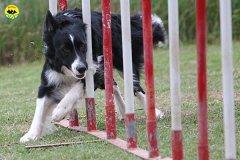 206-agility-dog-cecina-11-04-10