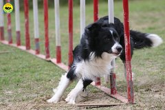 207-agility-dog-cecina-11-04-10