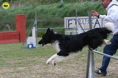 208-agility-dog-cecina-11-04-10