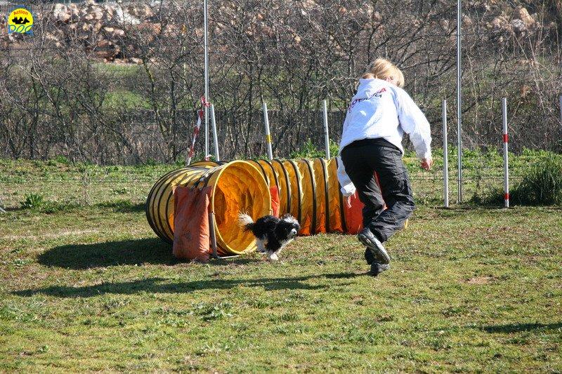 03-agility-dog-24-02-08.jpg