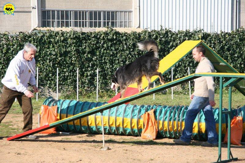 06-agility-dog-24-02-08.jpg