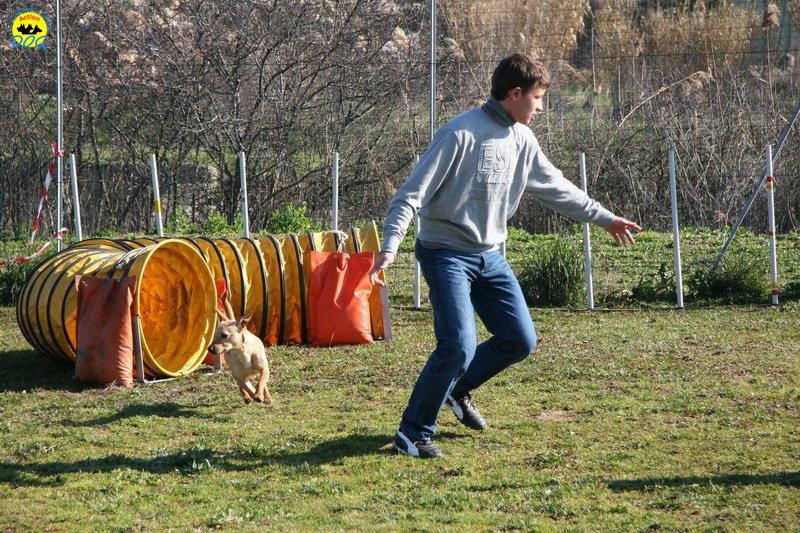 07-agility-dog-24-02-08.jpg
