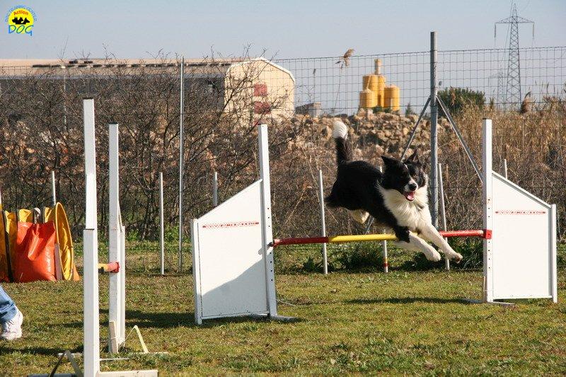 09-agility-dog-24-02-08.jpg