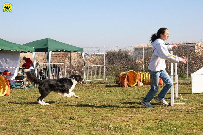 11-agility-dog-24-02-08.jpg