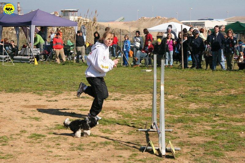 20-agility-dog-24-02-08.jpg