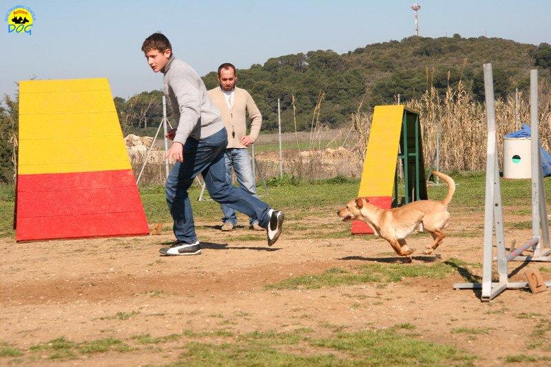 23-agility-dog-24-02-08.jpg