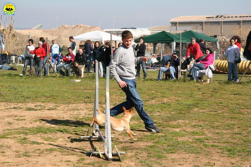 25-agility-dog-24-02-08.jpg