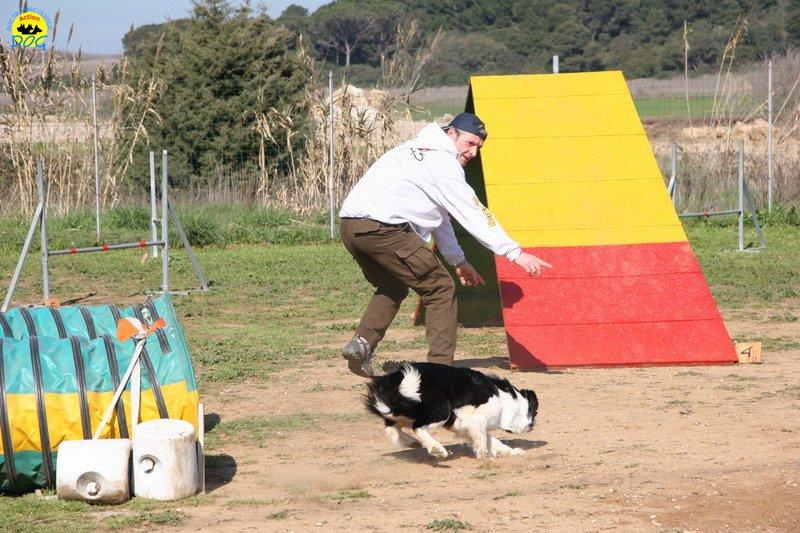 31-agility-dog-24-02-08.jpg