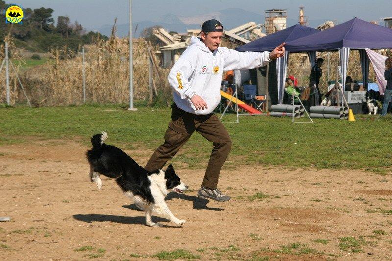 33-agility-dog-24-02-08.jpg