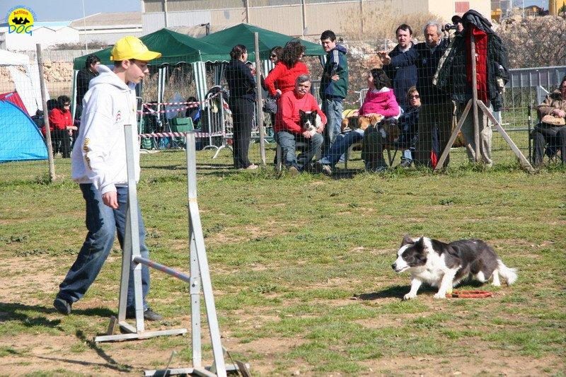35-agility-dog-24-02-08.jpg