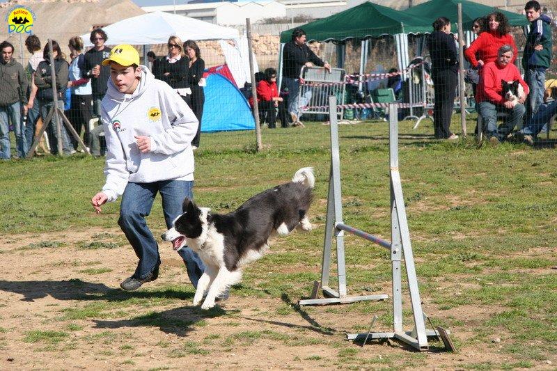 36-agility-dog-24-02-08.jpg