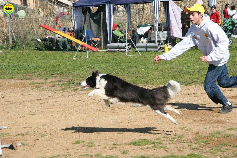 37-agility-dog-24-02-08.jpg
