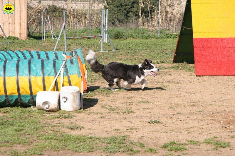 40-agility-dog-24-02-08.jpg