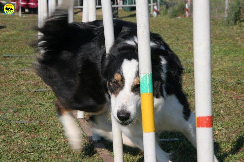 42-agility-dog-24-02-08.jpg