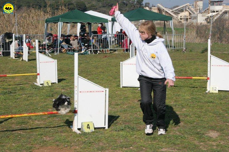 45-agility-dog-24-02-08.jpg