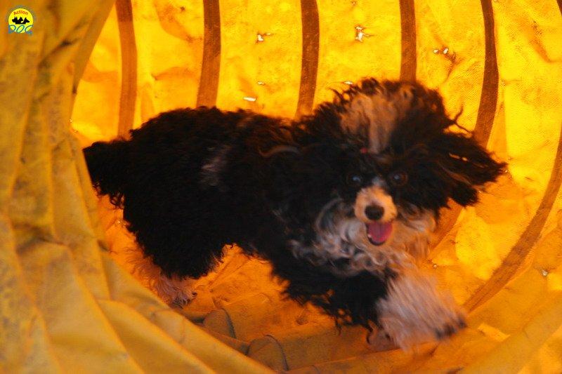 46-agility-dog-24-02-08.jpg