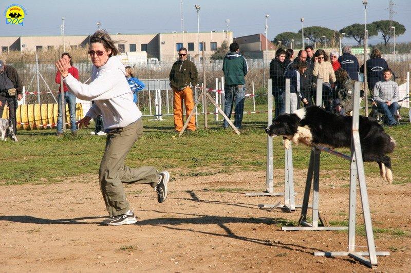 49-agility-dog-24-02-08.jpg
