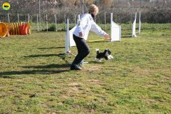 04-agility-dog-24-02-08.jpg