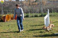 08-agility-dog-24-02-08.jpg
