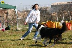 10-agility-dog-24-02-08.jpg