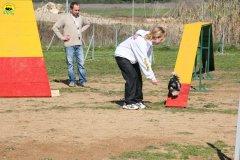 17-agility-dog-24-02-08.jpg