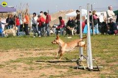 22-agility-dog-24-02-08.jpg