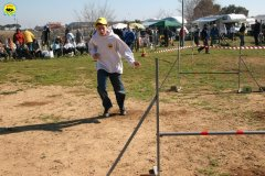 28-agility-dog-24-02-08.jpg
