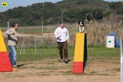 32-agility-dog-24-02-08.jpg