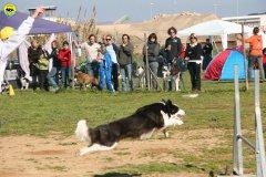 41-agility-dog-24-02-08.jpg