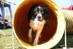 48-agility-dog-24-02-08.jpg