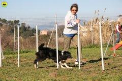 50-agility-dog-24-02-08.jpg