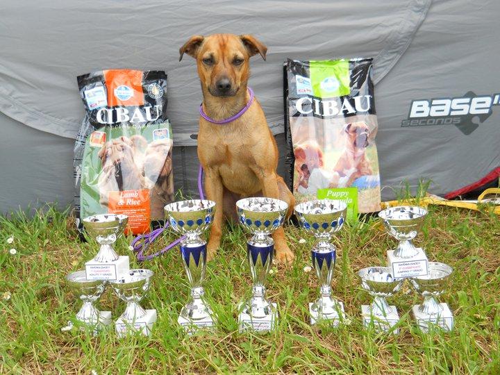 Wisky e i suoi premi delle gare nazionali di Ravenna (23-24-25 Aprile 2011)