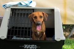 Io sono Nash