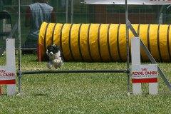 Mollica volante alla gara nazionale